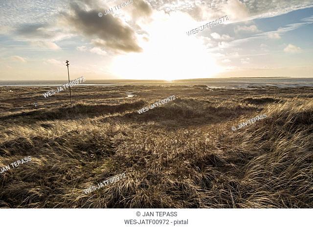 Germany, Lower Saxony, East Frisia, Langeoog, dune landscape at sunset