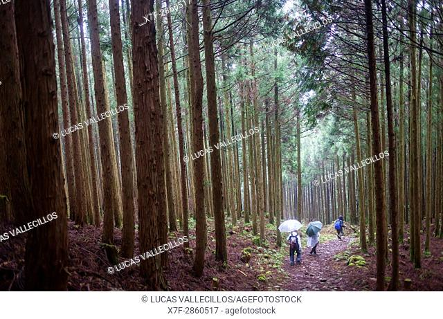 Pilgrims in Ogumotori-goe section, Kumano Kodo, Nakahechi route, Wakayama, Kinki, Japan