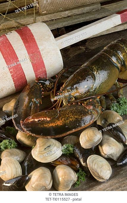 Still life of lobster and clams