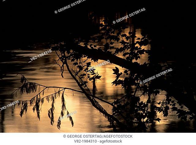 Manatee Springs sunset, Manatee Springs State Park, Florida