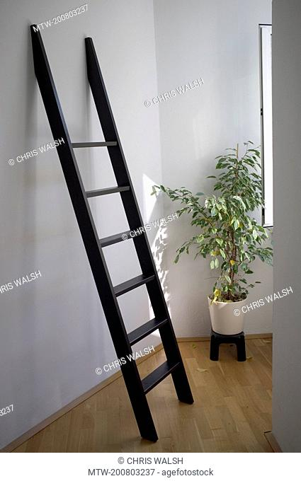Ladder black wooden against interior wall plant