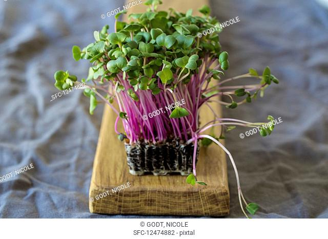 Fresh cress on a wooden board