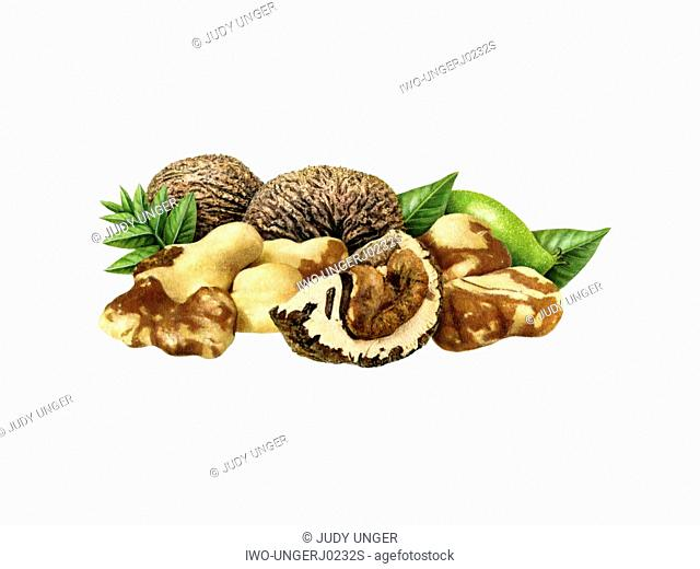 A Group of Black Walnuts