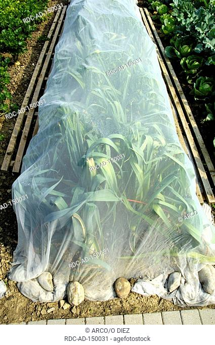 Protection net on bed of Leeks