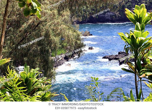 Peeking through pine and yucca trees and ferns to the Pacific Ocean at Onomea Bay in Papaikou, Hawaii