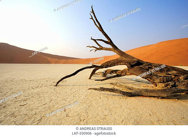 Dead tree laying on clay soil in front of red sand dune, Deadvlei, Sossusvlei, Namib Naukluft National Park, Namib desert, Namib, Namibia