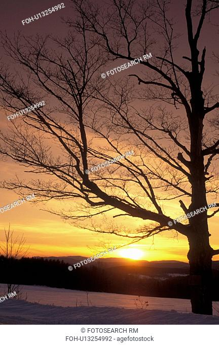 sunset, Vermont, VT, Silhouette of trees at sunset in the snow in winter in East Montpelier