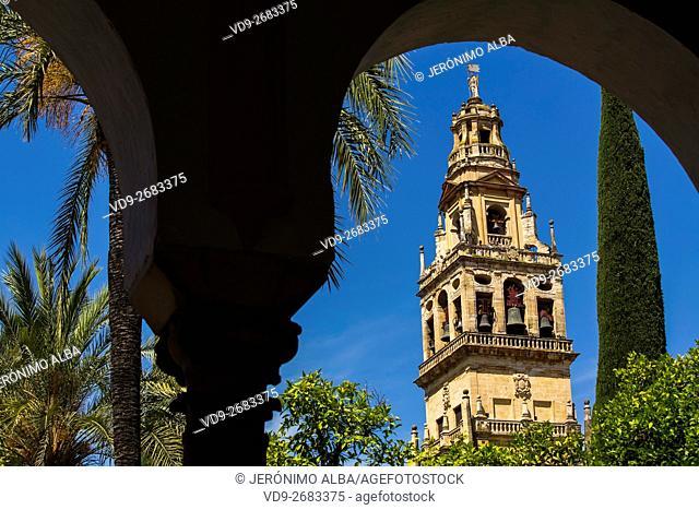 Alminar Tower minaret, Patio de los Naranjos, Mezquita Cathedral. Cordoba City Andalusia, Spain, Europe