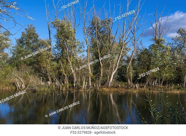 Aquaculture, Danube Delta, UNESCO WORLD HERITAGE, Tulcea County, Romania, Europe