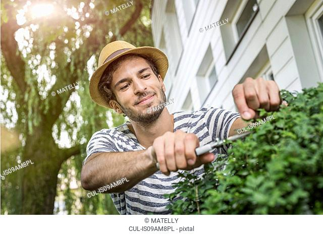 Young man in garden pruning bush