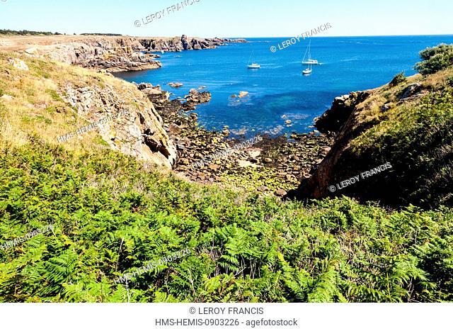 France, Vendee, Ile d'Yeu, ferns and the wild coast