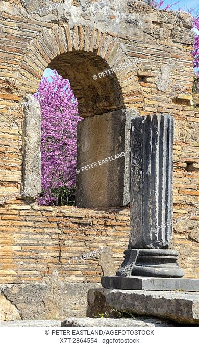 Pheidias' workshop and paleochristian basilica at Olympia at springtime with the judas trees in bloom. Ancient Olympia, Peloponnese, Greece
