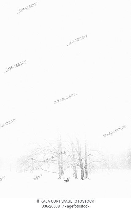 White out, Stromovka park, Prague, Czech Republic