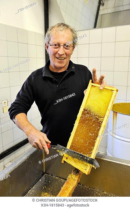 Vincent Pericard, beekeeper uncapping beewax honeycombs, La Miellerie, Beurrieres, Livradois-Forez Regional Nature Park, Puy-de Dome department, Auvergne region