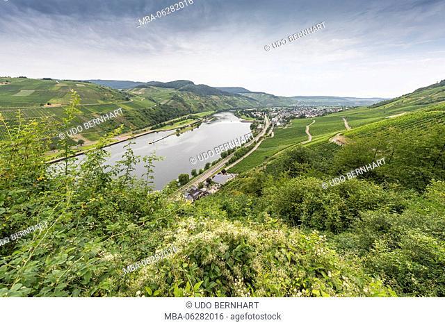 Europe, Germany, Rhineland-Palatinate, district Bernkastel Wittlich, Mittelmosel, the Moselle, Wintrich, view of the Geyerskopf