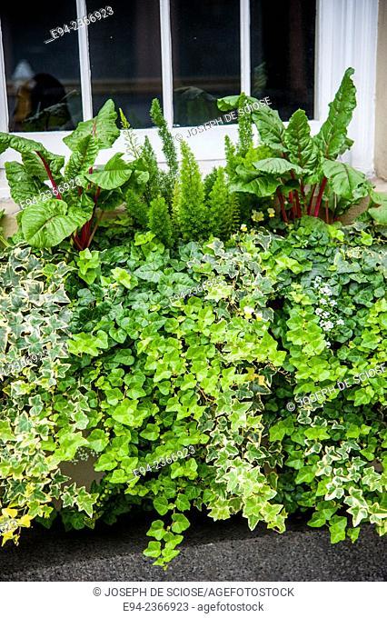 Window box of plants in Charleston South Carolina