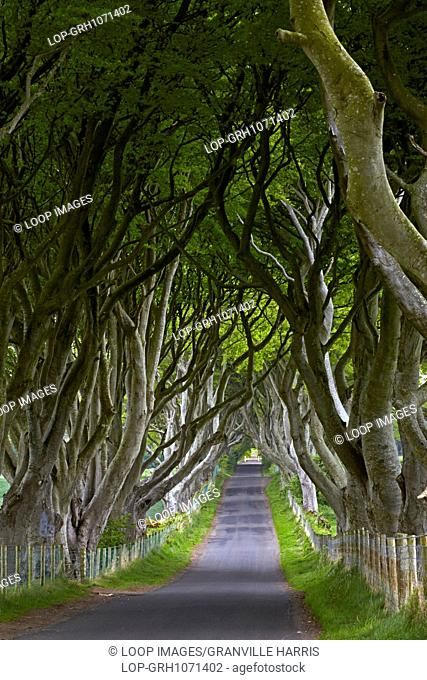 Bregagh Road which is known locally as the Dark Hedges