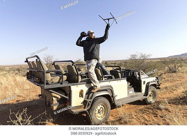 Africa, Southern Africa, South African Republic, Kalahari Desert, Scientific research, researcher following a female cheetah