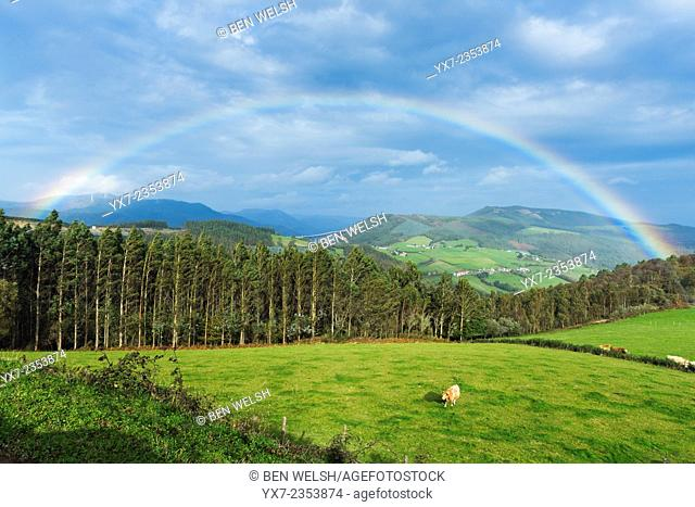 Rainbow and cow. Galicia countryside. Northern Spain