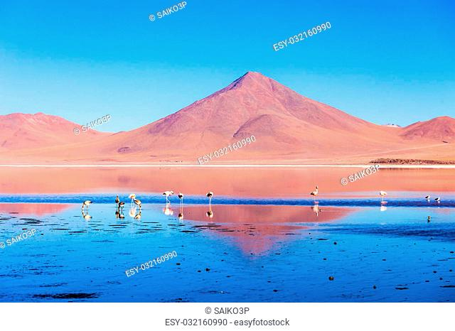 Flamingos at Laguna Colorada (Red Lake), it is a salt lake in the Altiplano of Bolivia