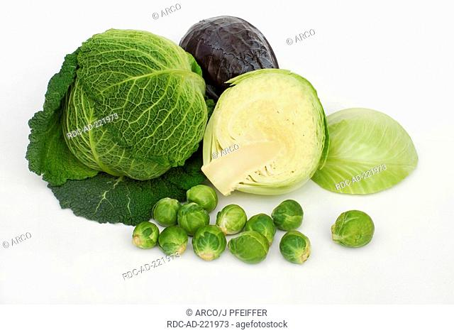 Several kind of cabbage, Savoy Cabbage, White Cabbage, Red Cabbage and Brussels Sprouts, Blue Kraut
