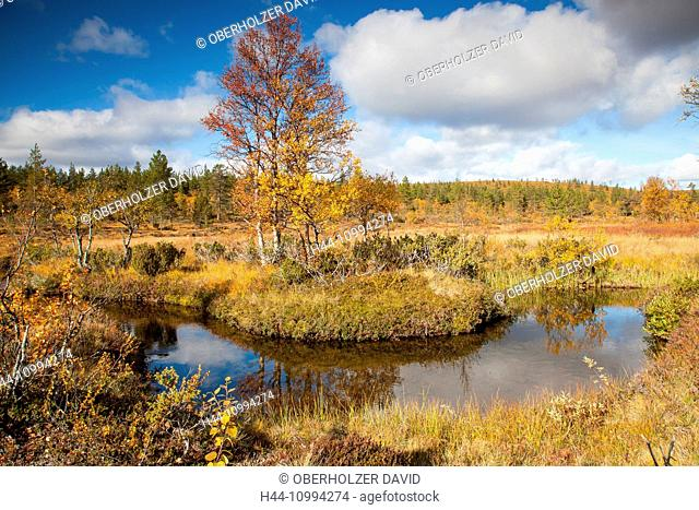 Bach, trees, Europe, Finland, autumn, autumn colors, Kiilopää, scenery, landscape, Lapland, moor, Scandinavia, marsh, Urho Kekkonen, national park, water