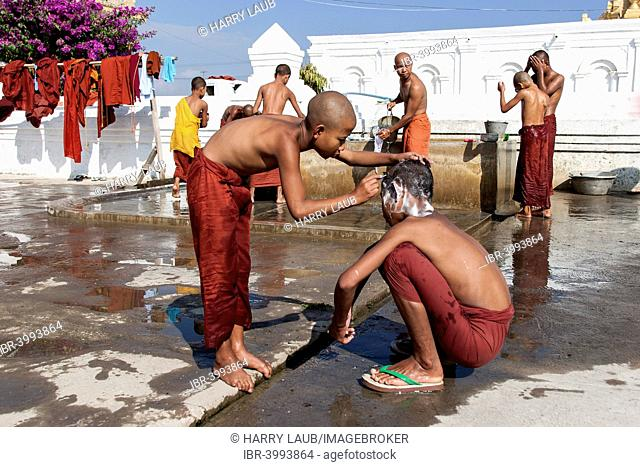 Novice monks during the morning bath with a shaving of the head in the Shwe Yaunghwe Kyaung Monastery, near Nyaungshwe, Shan State, Inle Lake, Myanmar
