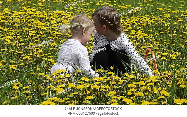 Girls pick dandelion