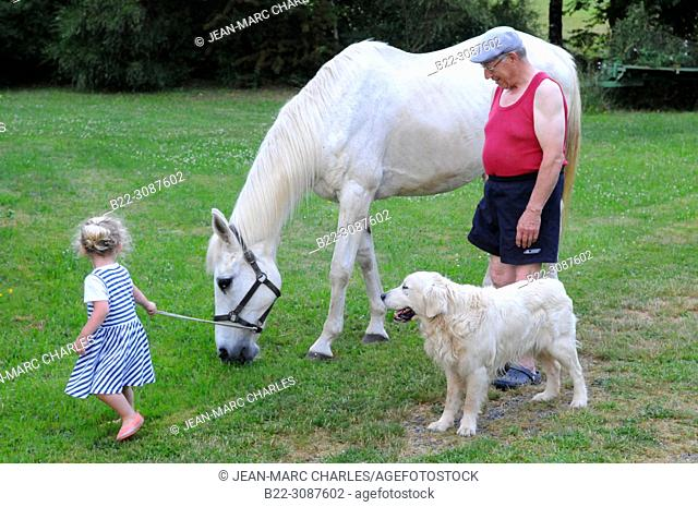 Grandfather and his horse with a 3-year- old girl and a golden retriever dog