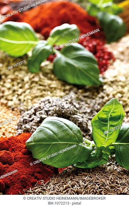 Various spices, caraway, bell pepper powder, basil