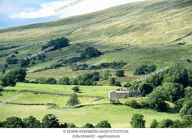 Stone walls follow along the sunlight hills of the Dales, Yorkshire Dales, UK