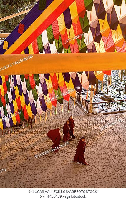 Monks, in Namgyal Monastery,in Tsuglagkhang complex  McLeod Ganj, Dharamsala, Himachal Pradesh state, India, Asia