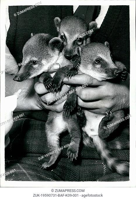Jul. 31, 1959 - 31-7-59 Pancho, Pablo and Papita make their public debut. Coati Mundi babies at Battersea Park Zoo ?¢'Ǩ'Äú To be seen at the Battersea Park Zoo...