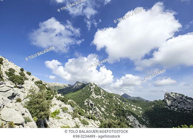 Puig de Ses Bassetes, 1212 metros, Escorca, Paraje natural de la Serra de Tramuntana, Mallorca, balearic islands, Spain