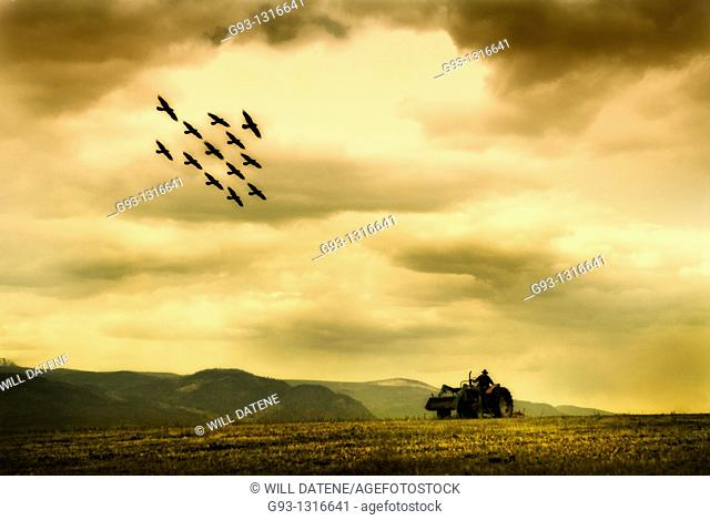 composit of farmer driving tractor in field with birds flying in formation