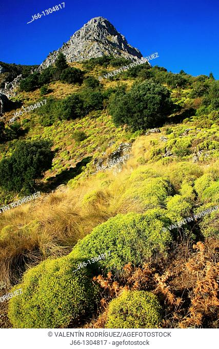 San Cristobal peak in the Sierra del Pinar, Spanish Fir (Abies pinsapo) forest, Sierra de Grazalema Natural Park, Cadiz province, Andalusia, Spain