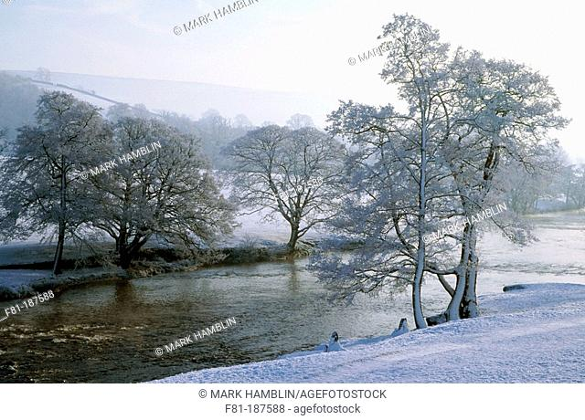 Frosted Alders (Alnus glutinosa). Chatsworth Park in winter. Peak District National Park. Derbyshire. England