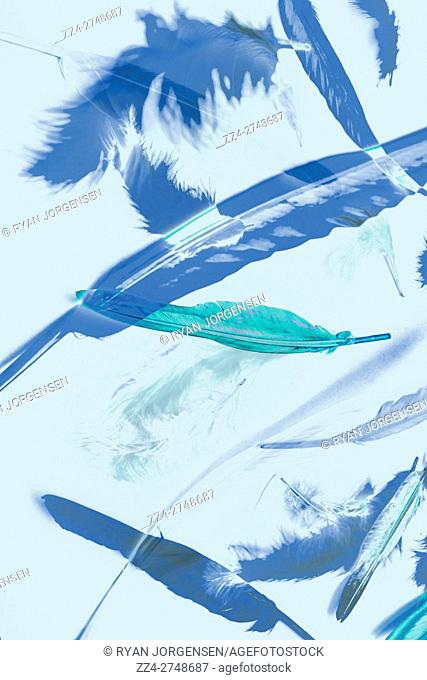 Simple fine art design of bllue toned feather abstract falling on neutral background. Minimalism artwork