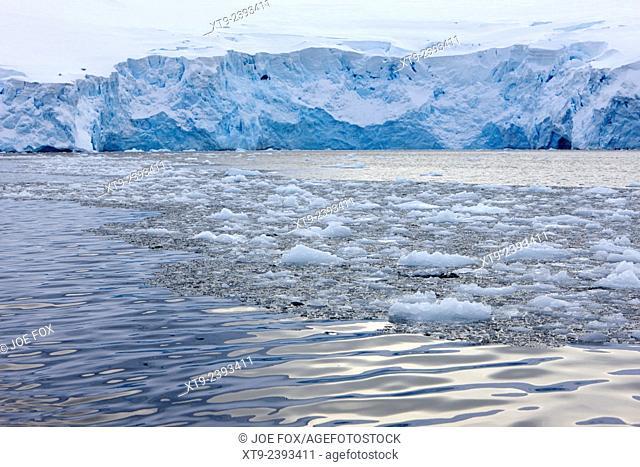brash sea ice forming in front of glacier wall face port lockroy Antarctica