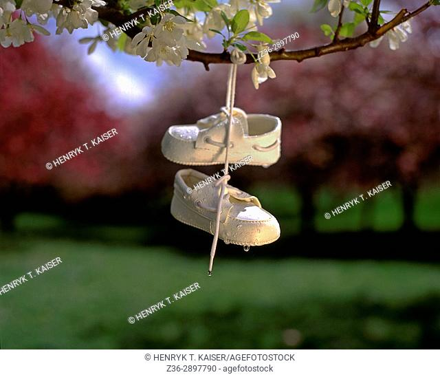 little child's shoes hanging on tree