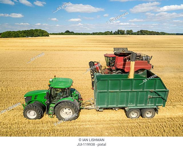 Harvest aerial of combine harvester cutting summer barley field crop with tractor trailer under blue sky on farm