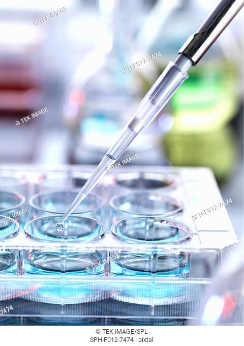 Pipetting sample into multiwell plate for analysis in a laboratory