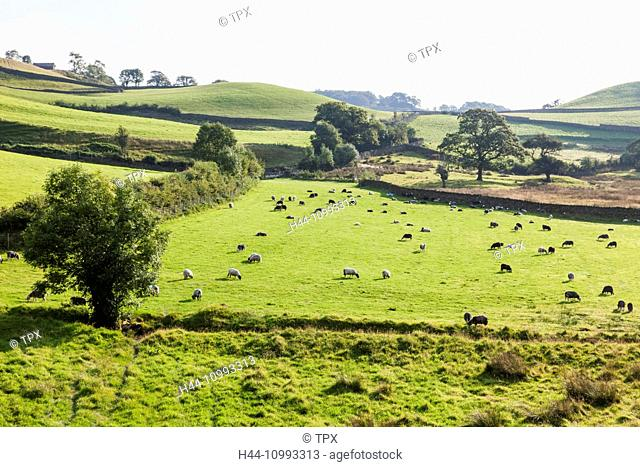 England, Cumbria, Lake District, The Langdales