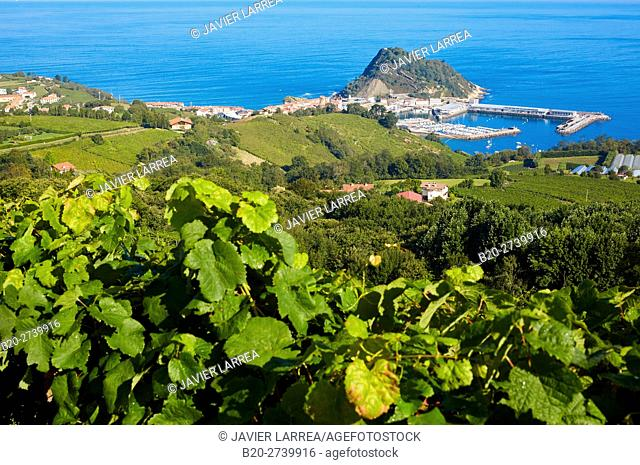 Txakoli vineyards. Getaria. Gipuzkoa. Basque Country. Spain