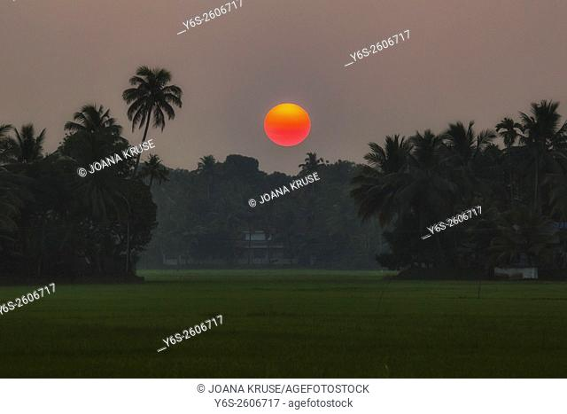 sunset over paddyfields in Alappuzha, Backwaters, Kerala, South India, Asia