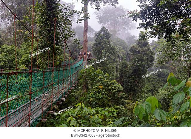 canopy walkway in the dipterocarp rainforest of Danum Valley, Malaysia, Borneo, Sabah