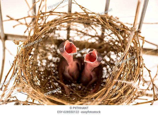Nesting Birds - Samut Sakhon, Thailand
