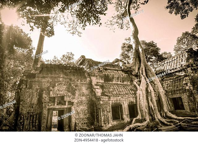 Ta Prohm is the modern name of a temple at Angkor, Siem Reap Province, Cambodia, built in the Bayon style largely in the late 12th and early 13th centuries and...