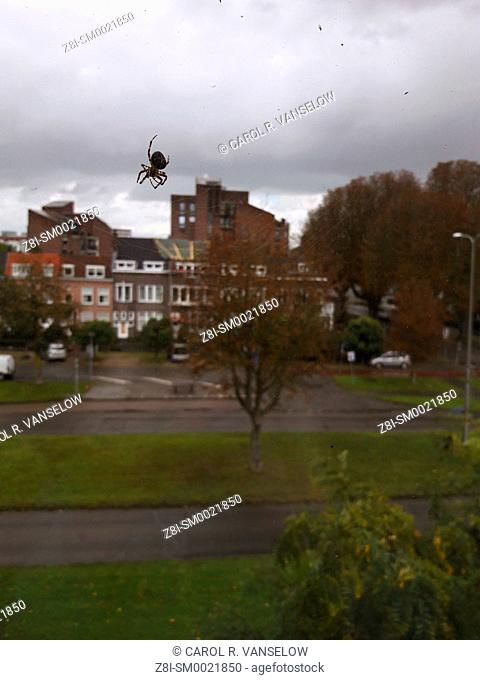 Spider on window