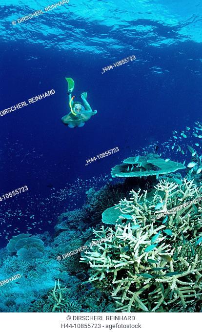 10855723, Maldives, Indian Ocean, Meemu Atoll, sno